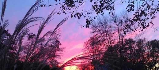 peach of the sky photo by shannon mayhew