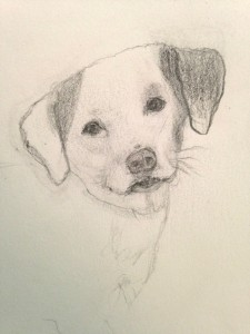 New Casey Drawing by Shannon Mayhew
