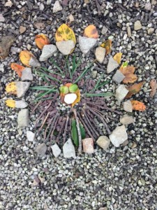 Peace Garden Treasure photo by Shannon Mayhew